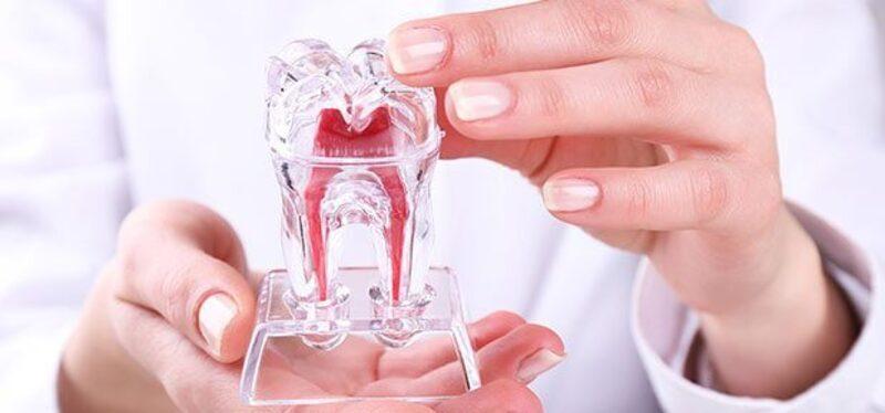 Heilung des Zahnfleisches
